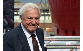 David Attenborough feje óriásira, kétméteresre nőtt az éghajlatváltozás közepette - fotó