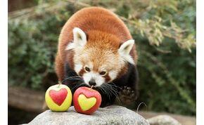 Megható kisfilmet tett közzé a Fővárosi Állatkert a közelgő Valentin-nap alkalmából
