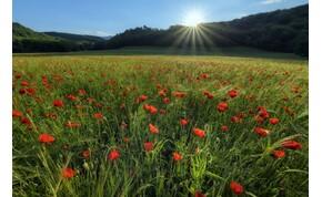 És akkor jön egy kis tavasz, a napfény pedig megsimogatja az arcod