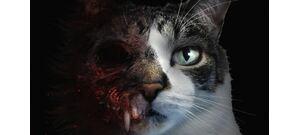 Már tesztelhető a horrorjáték, amiben egy cicával kell nyomozni - előzetes