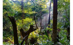 180 év után újra látták a titokzatos szárnyas élőlényt a borneói esőerdőben
