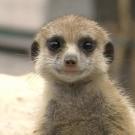 Napi cukiság: tavaszi ébredés a budapesti állatkertben - videó