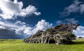 Egy hely ahol mindig fúj a szél - itt még a fák is kidőlve nőnek - képek