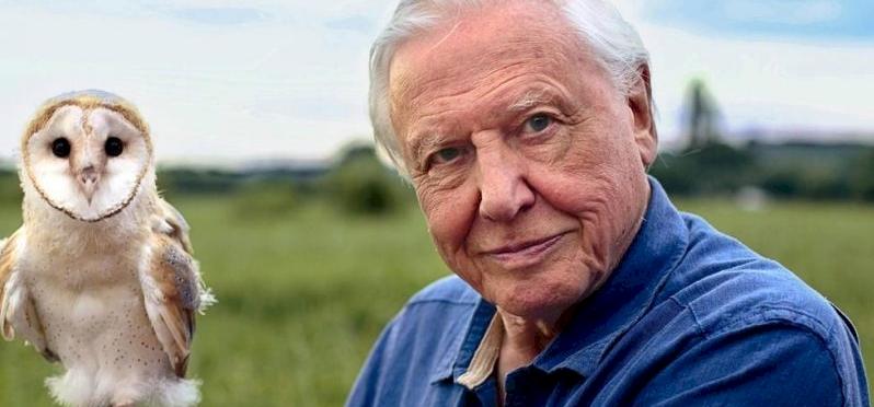 Jön David Attenborough új sorozata, a Life in Color