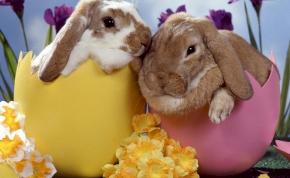 Csoki vagy plüss: ne vegyél élő nyulat húsvétra!