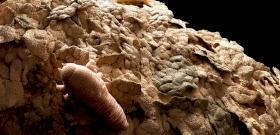 Sokkoló kinézetű, apró élőlényekkel lehet tele a bőröd - így veheted észre őket