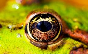 Horror: itt a szemgolyó alakú kamera, amelytől sokkot kapott a fél világ -videó