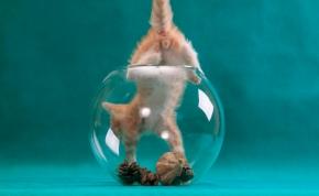 Égető kérdés: a macska tompora valóban minden felülettel érintkezik a házban?