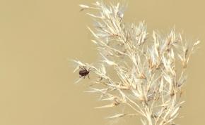 Veszélyes kullancsfaj jelent meg Magyarországon, ezekre a tünetekre kell most nagyon odafigyelni!
