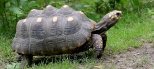Szenes teknős kelt ki a Szegedi Vadasparkban