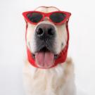 Kvíz: 10 elképesztő tény a legérdekesebb kutyafajtákról – te vagy a legnagyobb kutyaszaki?