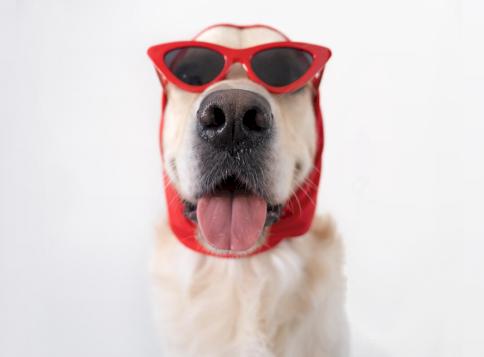 Kvíz: 10 elképesztő tény a legérdekesebb kutyafajtákról - te vagy a legnagyobb kutyaszaki?