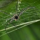 Hátborzongató, ahogy az egész várost beszőtték a pókok - videó
