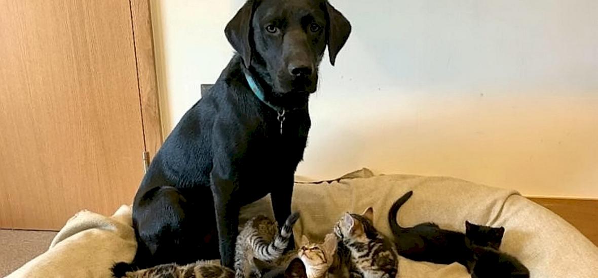 Nem találunk szavakat - videón, ahogy egy kutya világra segíti a kiscicákat