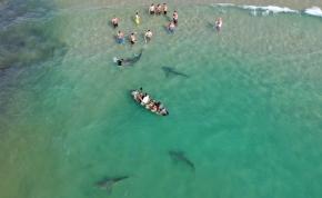 Centiken múlott az élete az egyik floridai fürdőzőnek, akire rátámadt egy cápa - videó