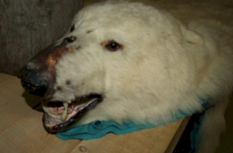 Alaszkában található a kutyaszánhúzás fővárosa