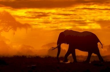 Szavanna szépségei: felismered, melyik sziluett melyik állatot rejti?