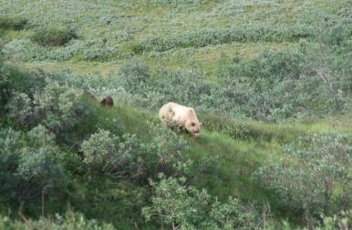 Az alaszkaiak megtanítottak arra, hogyan éljek túl egy medvetámadást