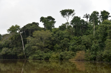 Találkozásom az amazonasi tűzhangyákkal