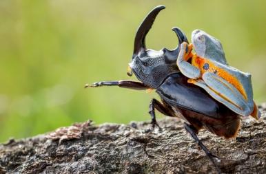 Szenzációs állati potyautasok: nézd meg a nap legérdekesebb galériáját!