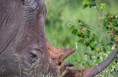 Nagy vagy, de szeretlek - fotó az állati szeretet csodájáról