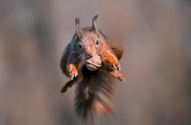 Itt vannak a levegő legádázabb akrobatái, az erdő apró szuperhősei