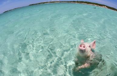 Röfik lepték el a Bahamákat