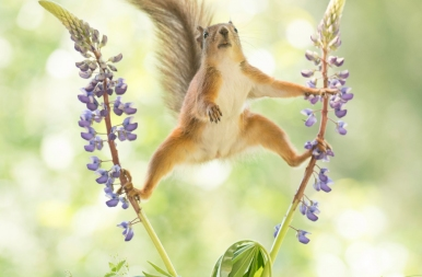 Reszkethet Van Damme: ez a cuki mókus úgy spárgázik, mint egy igazi akcióhős! – képek
